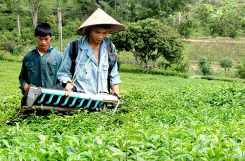 tea industry in vietnam The vietnamese wine market has seen explosive growth, with hotels, restaurants, and retailers now offering a wide variety of wines from around the world.