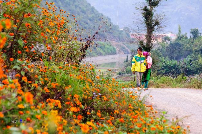 Rock Plateau, Ha Giang, Dong Van