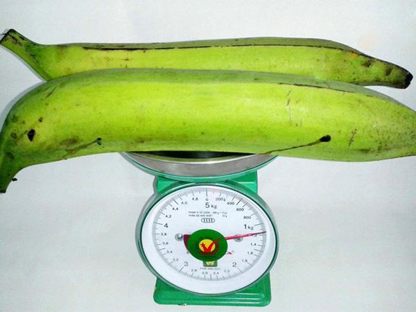 Giant banana variety, ta qua banana