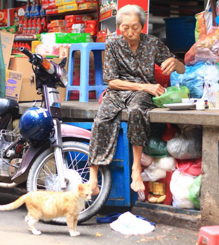 80-year-old woman raise 50 feral cats in Saigon