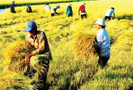 Vietnam's reliance on imports in agriculture leaves less profit for farmers