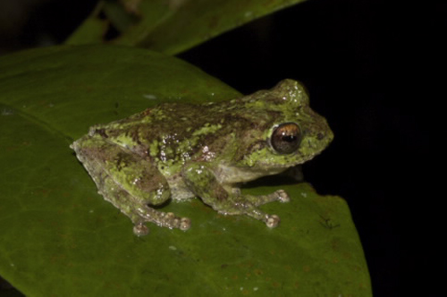 5343ec46bc963 New Species Discovered - Page 13 - Vanguard News Network Forum