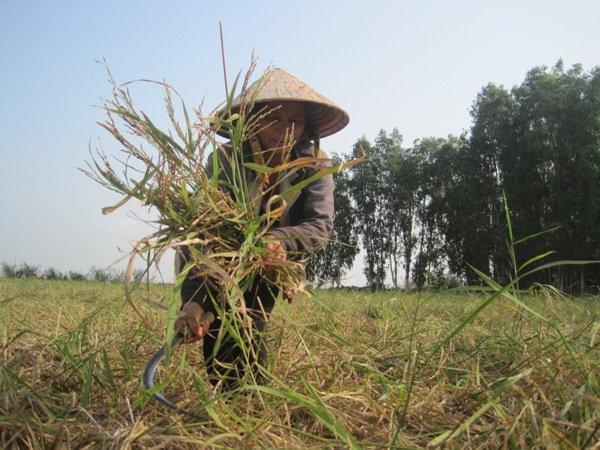 Vietnam, genetic sources