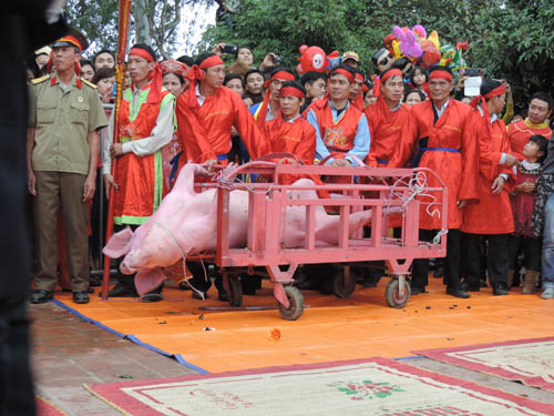 Animal Asia Foundation, Nem Thuong pig-chopping festival