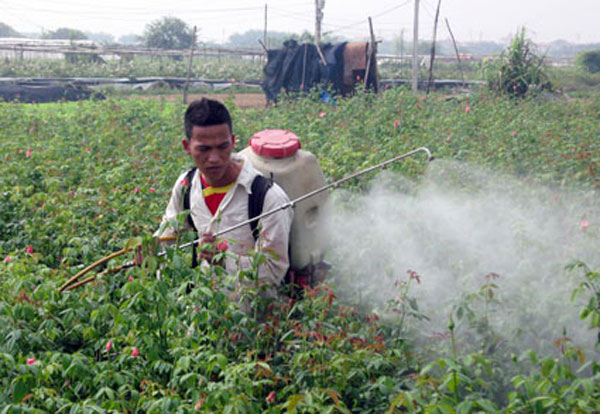 Pesticide abuse, food safety, environmental pollution, agricultural production