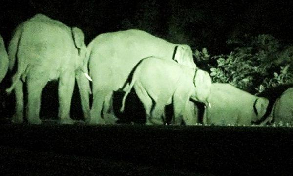 Dak Lak, wild elephant, preservation