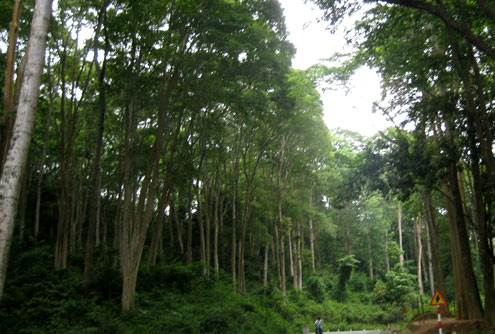 Vietnam vows to conduct scientific research at biosphere reserves