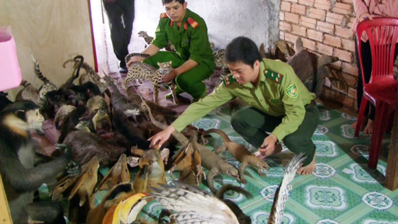 Operation Game Change, wildlife crime