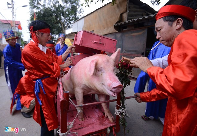 Pig-chopping ritual, Nem Thuong Village Festival, Animals Asia