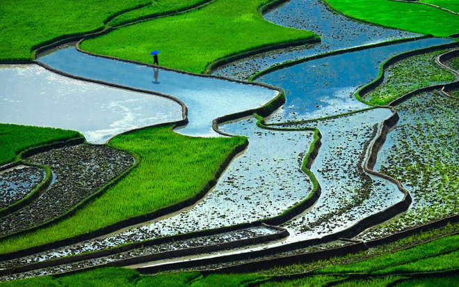 VN rice terraces on the world's most colourful landscapes