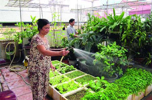 Roof Top Garden Benefits Pesticide Free Vegetables Earn Money