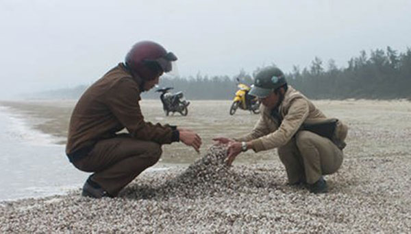 Masses of shellfish wash up dead in Ha Tinh Province