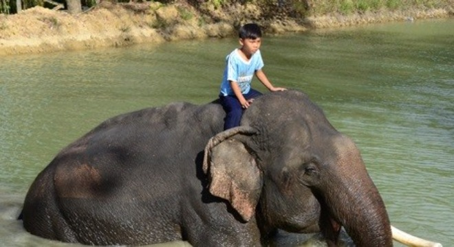 Nine-year-old mahout in Don Village