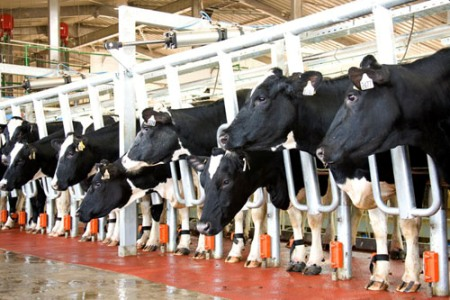 TH True Milk opens Moscow dairy: Russian media