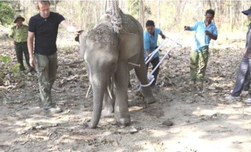 Elephant-minders at Yok Don National Park work to preserve remaining herd