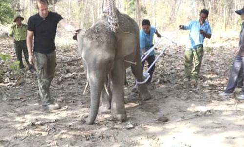Vietnam, Dak Lak, elephants