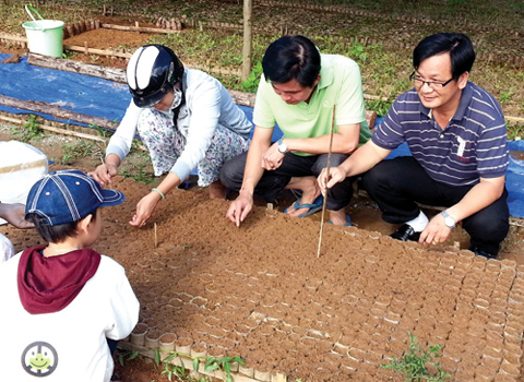 The $2 billion dream of Vietnam ginseng