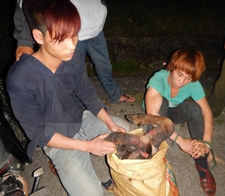 Poachers caught at Phong Nha-Ke Bang National Park