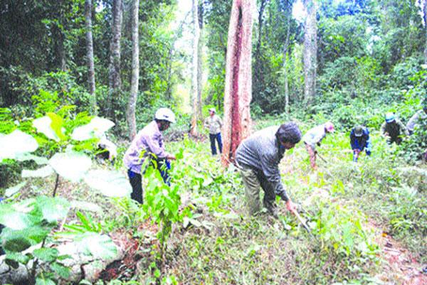 A vested interest in preserving forests