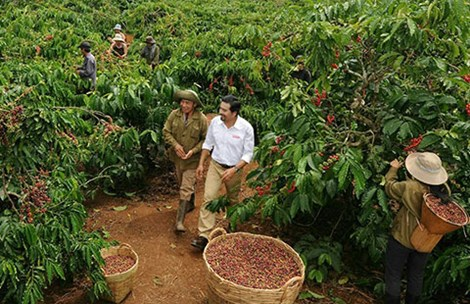 Is Chinese coffee obstructing Vietnamese coffee exports?