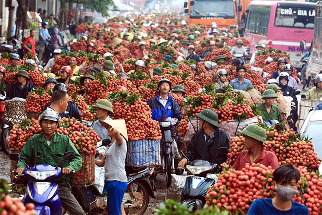 VN agricultural products need emergency aid