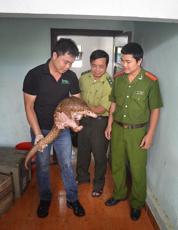 43 Sunda pangolins rescue in Hoa Binh