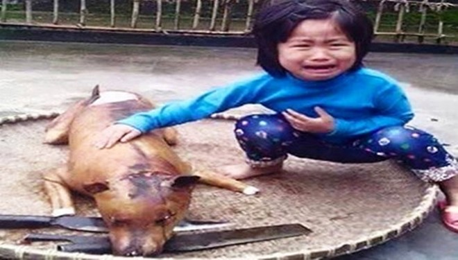 Calling for an end to cruel treatment of dogs in Vietnam