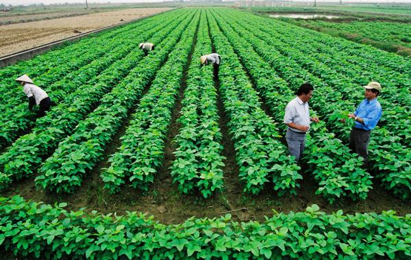 FLC Group, Vingroup invest in agriculture