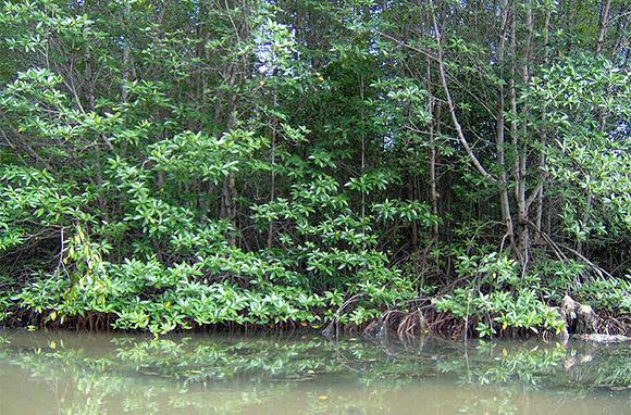 SmarterTravel, Can Gio wetlands