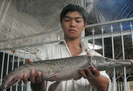 Odd fish species in Vietnam