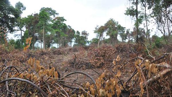 Phu Quoc Island, destroy, forest, encroachers