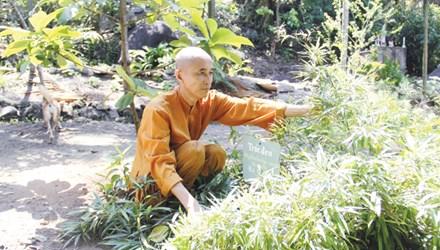 Vietnam, bamboo garden, Son Tra, Da Nang