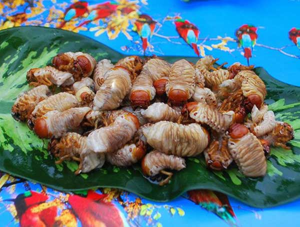 Quang Nam, Co Tu people, insect, pupal bees