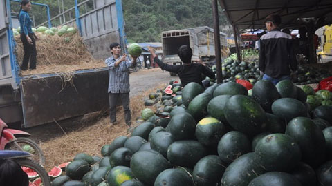 Storehouses in Lang Son will not save farm produce: analysts