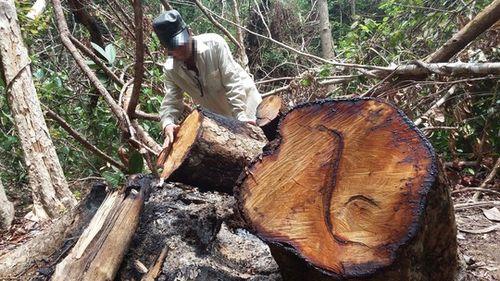 Vietnam, deforestation, Central Highlands