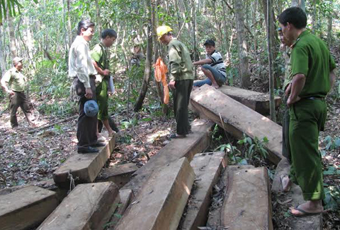 Vietnam, deforestation, Da Nang, illegal loggers