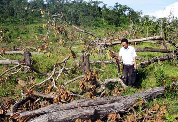 Central Highlands, alarming deforestation, plant forests