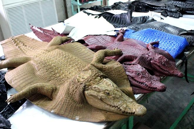 Inside the largest crocodile farm for leather in Saigon, crocodile farms in vietnam
