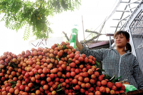 Sweet success for Vietnamese lychees