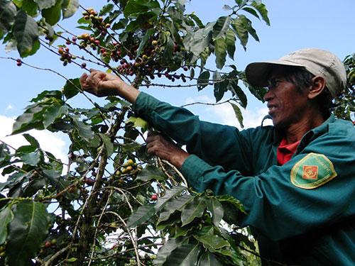 Vietnam, Da Lat Coffee, Starbucks, fame
