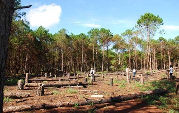 Gia Lai, alarm, illegal logging, deforested land