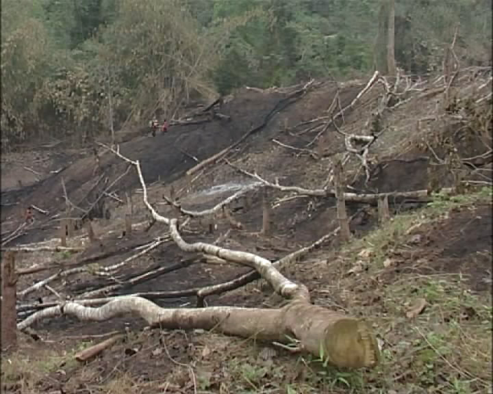 Deforestation in Dien Bien province at red alarm level