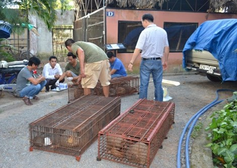 56 pangolins rescued in Thanh Hoa