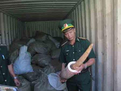 Tien Sa Port, smuggled goods, smuggled wildlife products