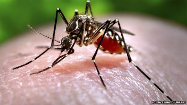 Insecticide coating effective against mosquitoes