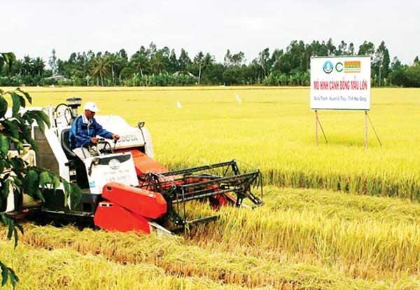 The journey of Vietnamese rice