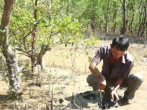 Vietnam, deforestation, Central Highlands, Tra Vinh province