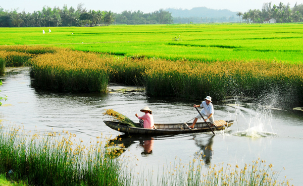 Vietnam needs new policy for rice production