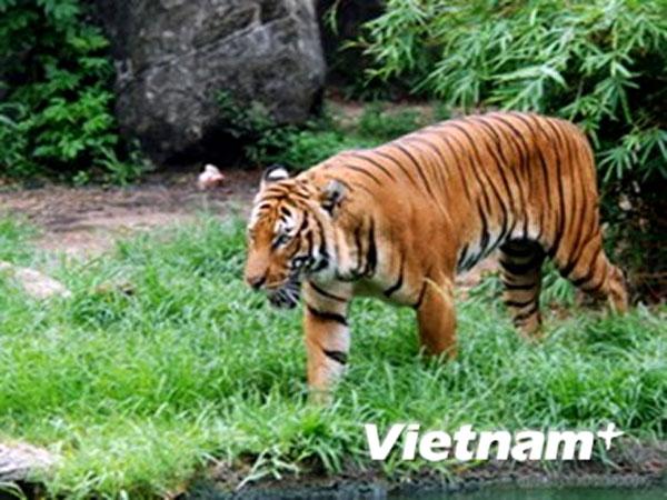 Combating wildlife trafficking, wildlife trading control, wildlife protection
