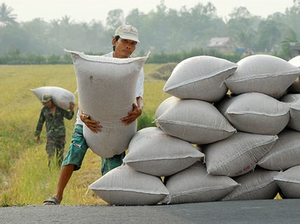 The beleaguered rice market: exports up, prices down